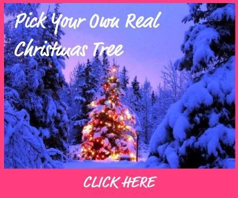 Pick Your Own Real Christmas Tree