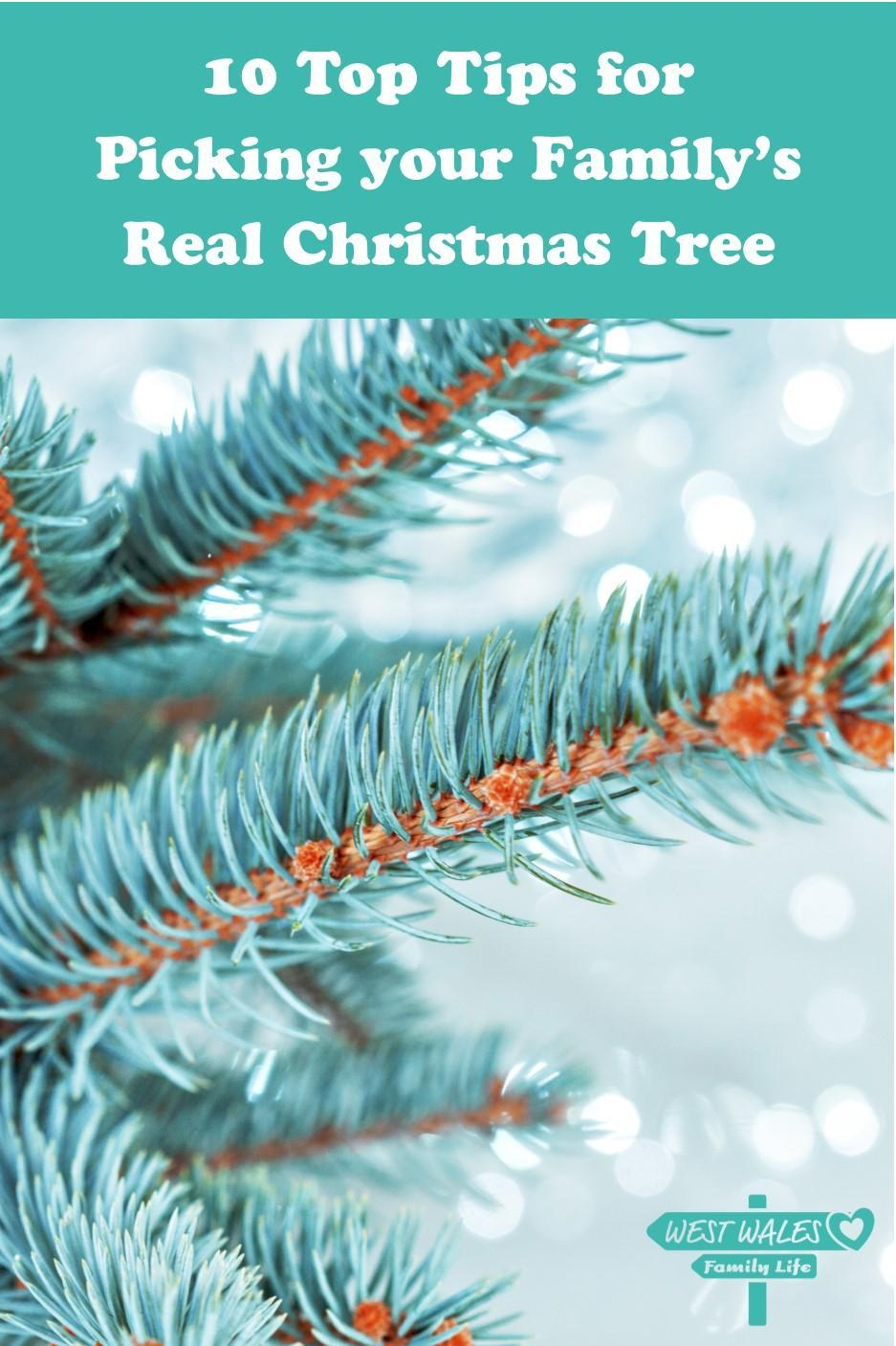 10 Top Tips for Picking your Familys Real Christmas Tree