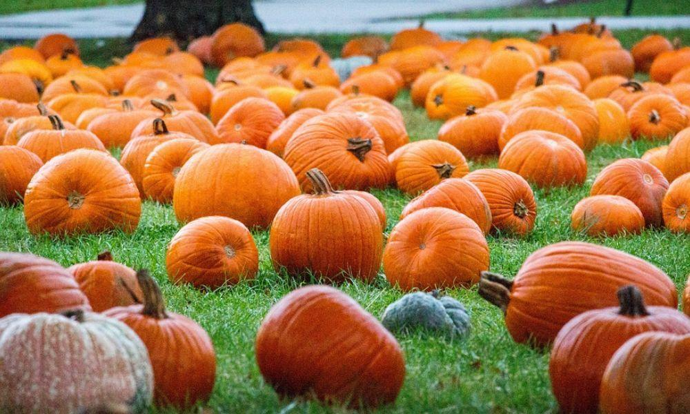 A Family Guide to Picking and Preserving your Pumpkin