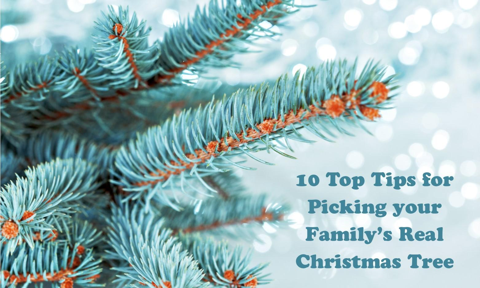 10 Top Tips for Picking your Family's Real Christmas Tree