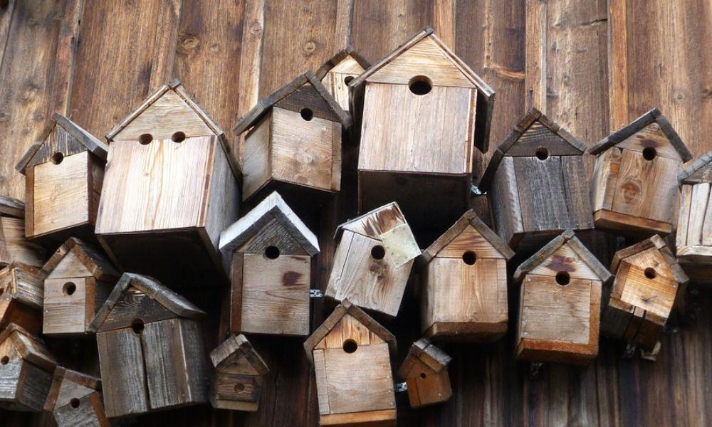 How your Family can Take Part in National Nestbox Week