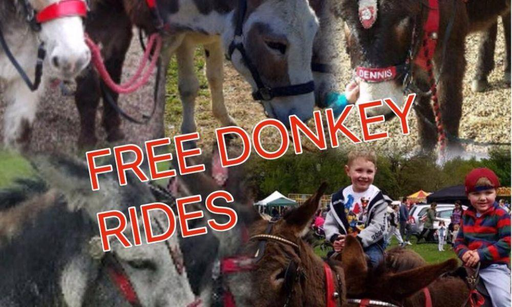 Donkey Day at Gnoll Park