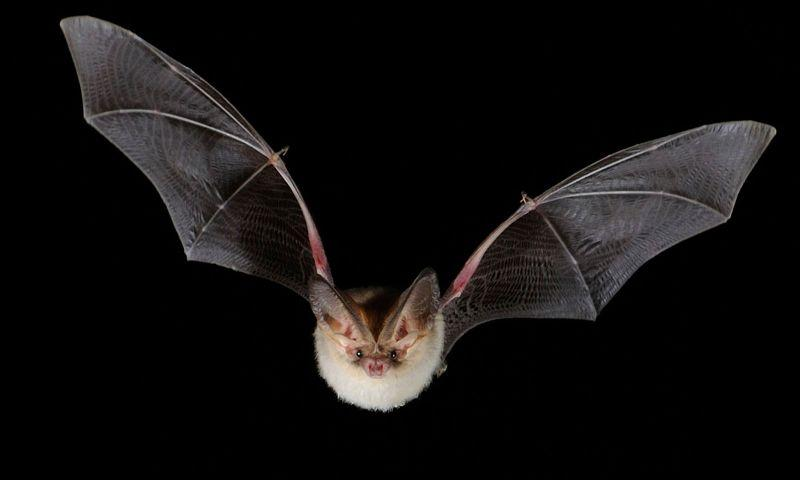 Bat Walks at Dinefwr
