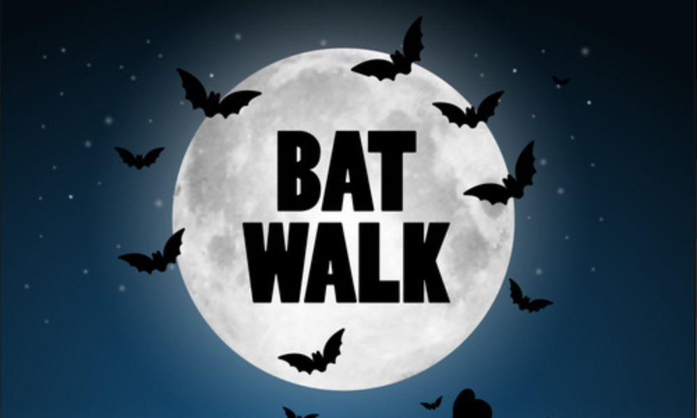 Bat Walk at Welsh Wildlife Centre