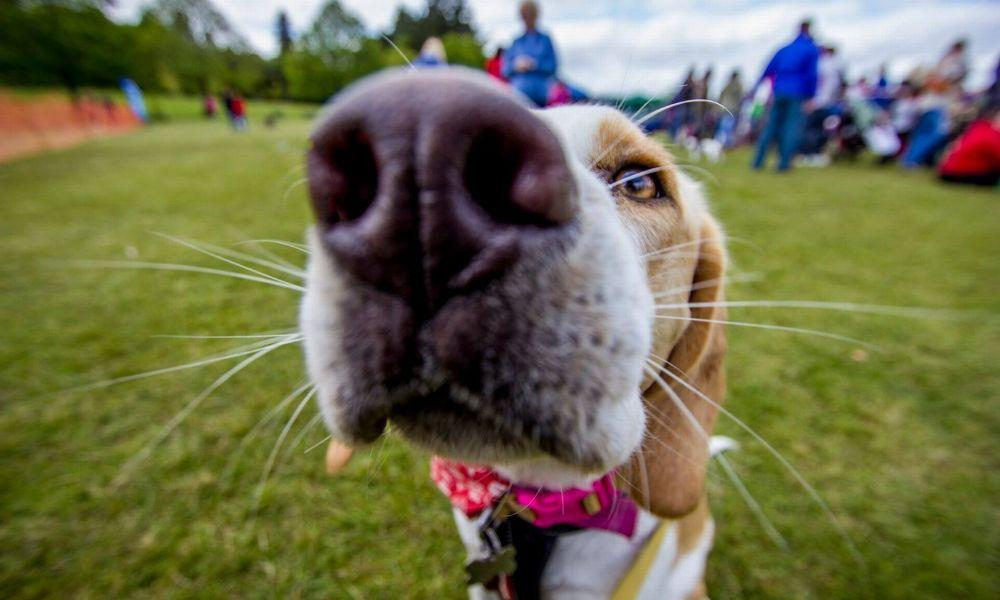 Llys Nini Dog Show and Family Fun Day