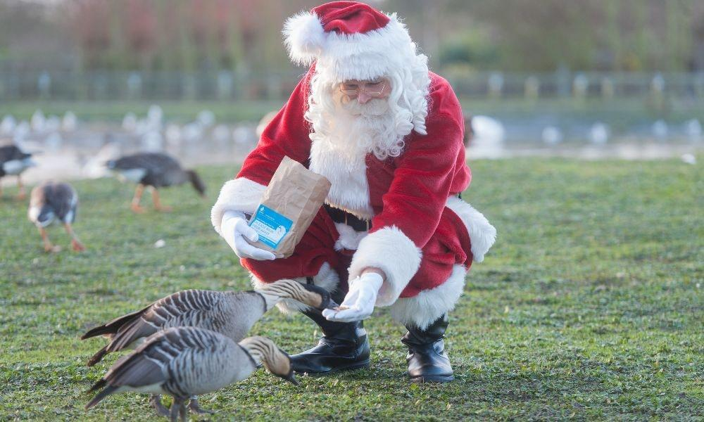 Feed the Birds With Santa at WWT Llanelli