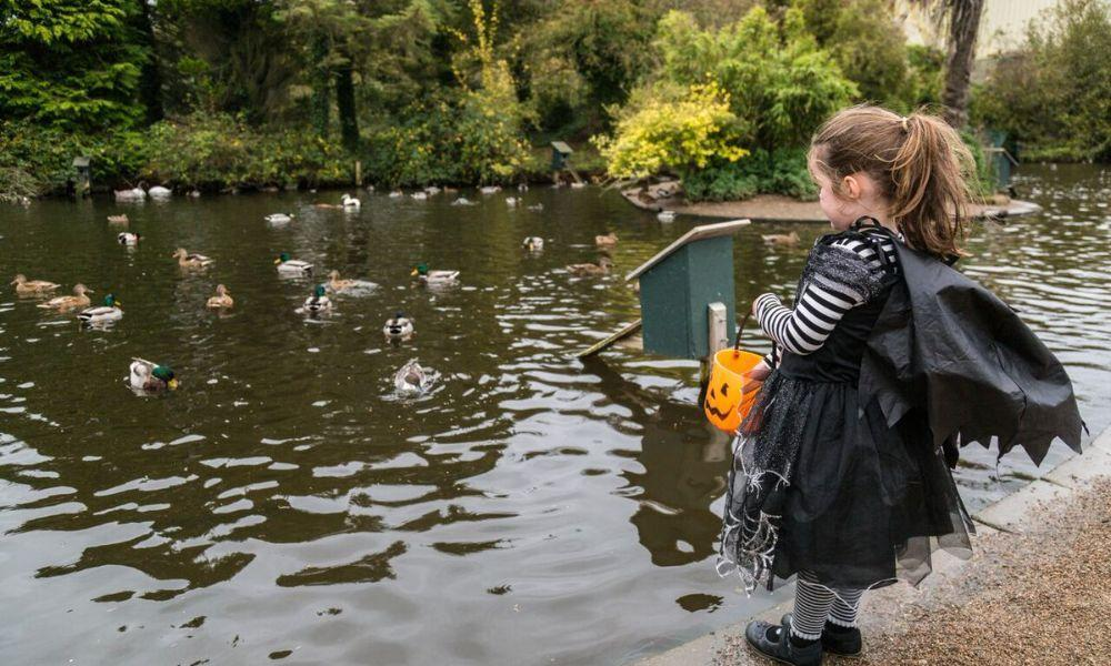October Weekends at WWT Llanelli