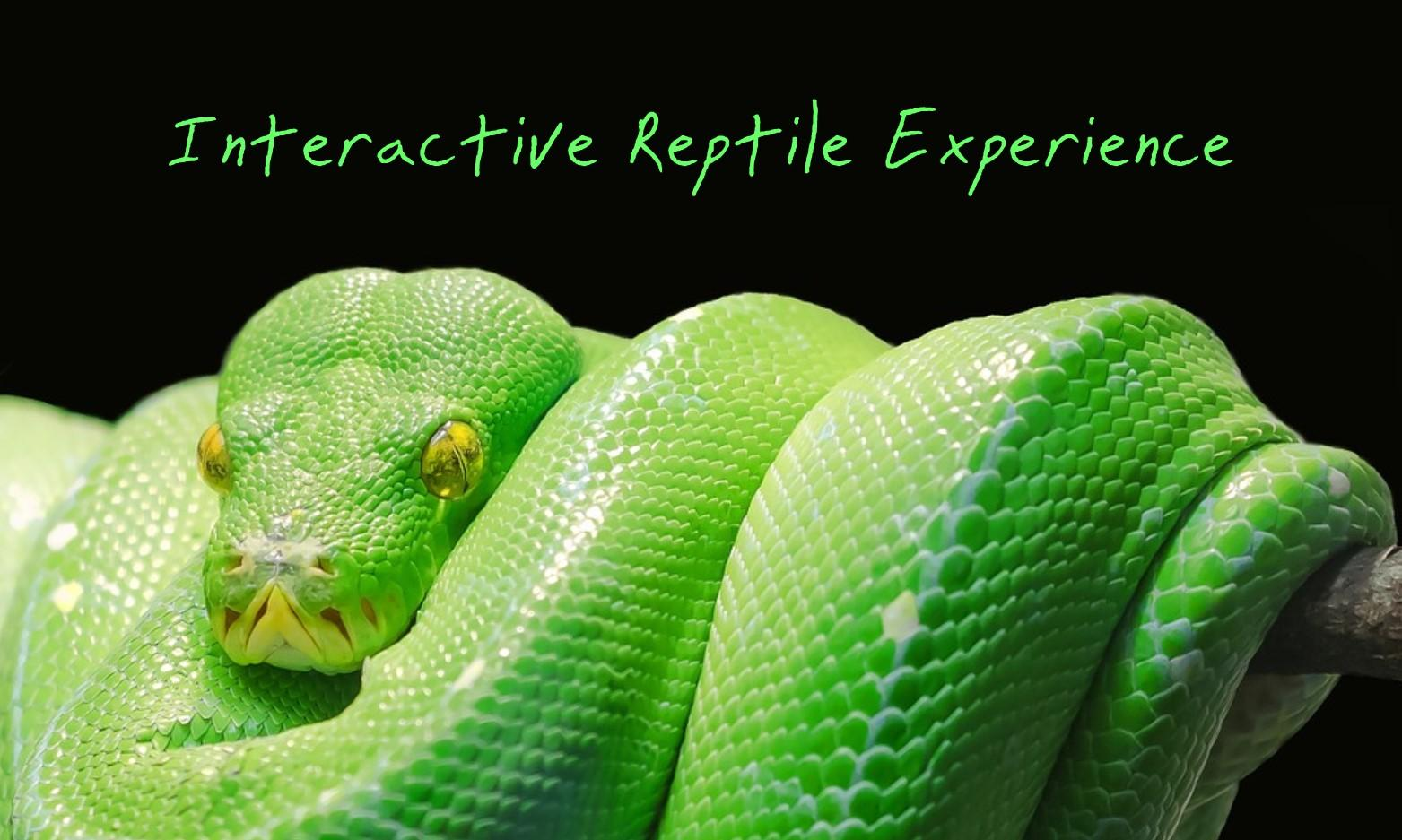 Interactive Reptile Experience at Milford Waterfront