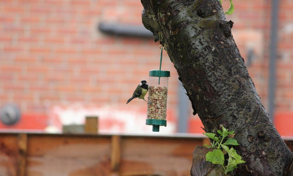 Make a Pine Cone Bird Feeder or Minibeast Home at The Welsh Wildlife Centre