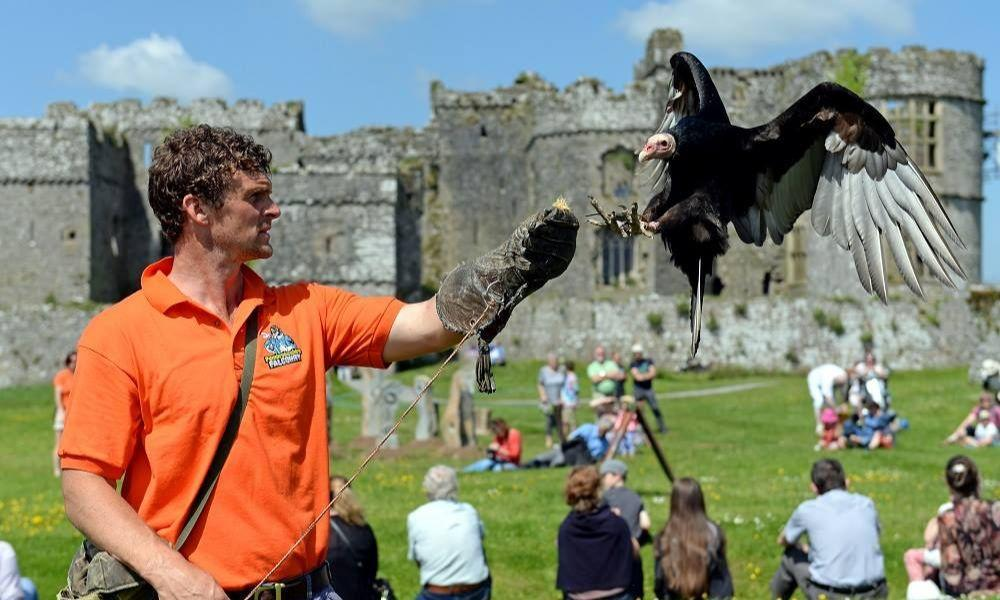 Pembrokeshire Falconry at Carew Castle