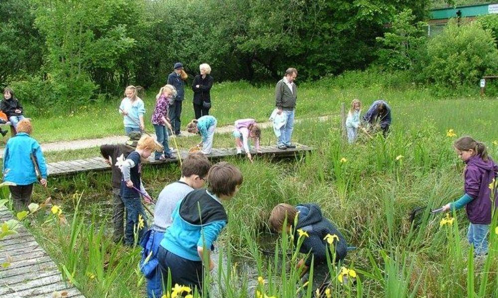 Pond Dipping at Welsh Wildlife Centre